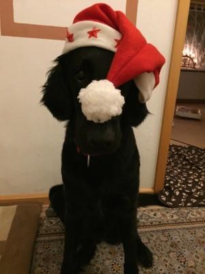 Homepage_Ataiga_Weihnachtsgruß
